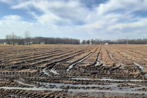 Harvest ruts from 2019