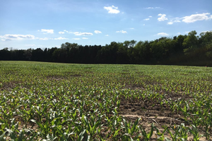 Central Michigan field crop update – May 28, 2020