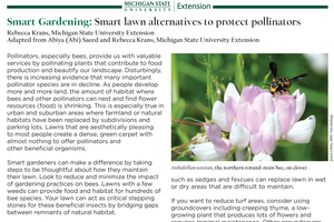 Smart Gardening: Smart lawn alternatives to protect pollinators