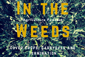 "Getting ""In the Weeds"" on cover crops"