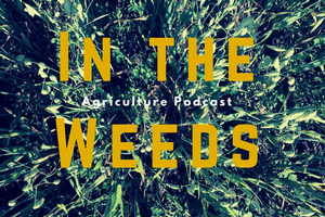 "Michigan Field Crops podcast ""In the Weeds"" first series now available"