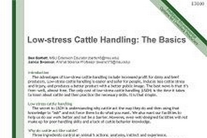 Low-stress Cattle Handling: The Basics (E3100)