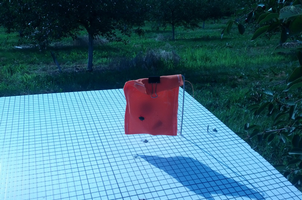 A pouch trap used in Japanese beetle trials.