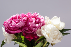 Storing peonies to bloom at a later date