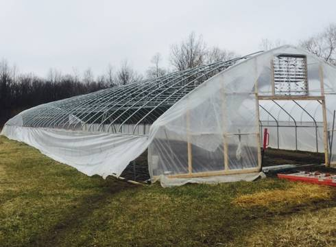The windstorm of March 8, 2017, caused damage to hoophouses. All images courtesy of Terry McLean, MSU Extension.