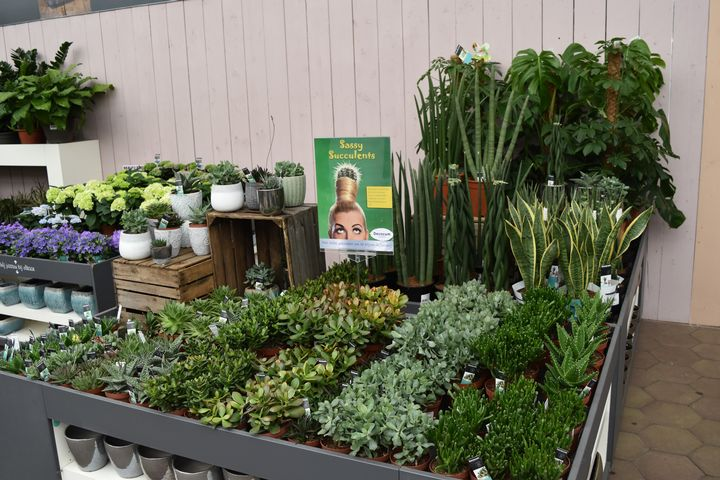 A wide variety of indoor plants to choose from in a local retailer