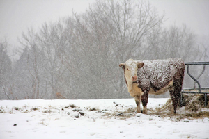 Winter animal care: Tips to keeping your animals healthy and happy during winter months