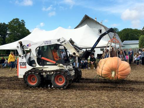Growing giant pumpkins presents giant challenges and great delight