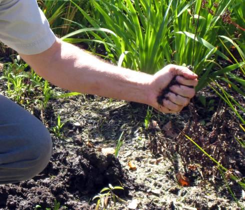 Compressing Soil Into A Ball. Photo Credit: Joy Landis, MSU