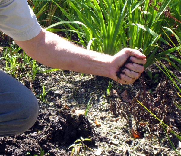 What to do about compacted soil - MSU Extension