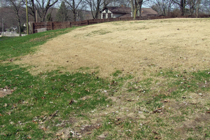 One small zoysiagrass patch can soon take over a whole lawn. Photo credit: Rebecca Finneran, MSU Extension