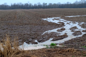Update on corn and soybeans as cover crops following prevented planting