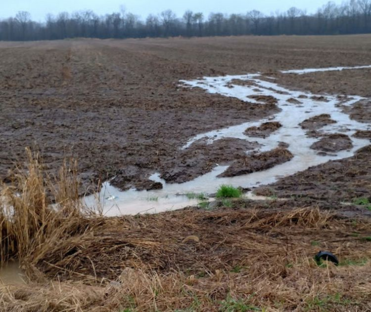 Water runoff in delayed planted field