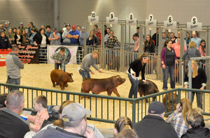 Challenges in agriculture economy may affect 4-H livestock auctions