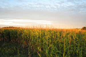 Field Crops Virtual Breakfast recordings are available for viewing online