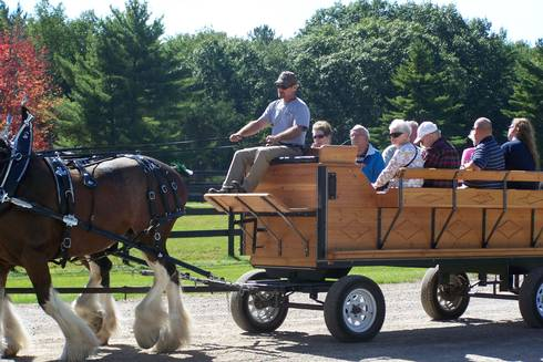 Carriage ride at the Alcona Clydesdale Horse Farm l MSU Extension