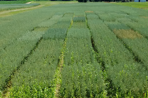 Oat varieties and production featured at Oat Field Day on July 19