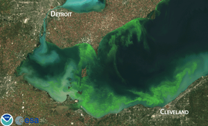Lake Erie harmful algae bloom threatens drinking water supplies