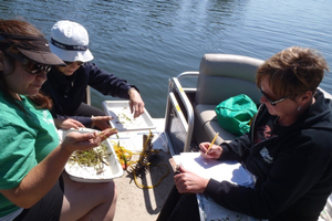 Exotic Aquatic Plant Watch helps volunteers detect invasive species in Michigan inland lakes