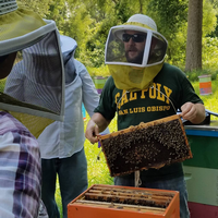 Adam Ingrao holding a beekeeping frame full of bees
