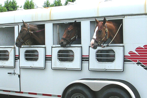 Horse trailer safety