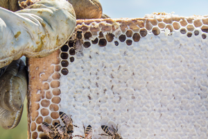 The Protection Plan for Managed Pollinators in Michigan draft release