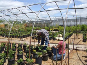 Tom Fernandez is studying ways to help nurseries preserve plants while using less irrigation.
