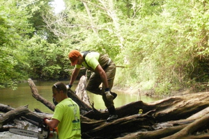 Woody debris in urban watersheds - Not so cut and dried