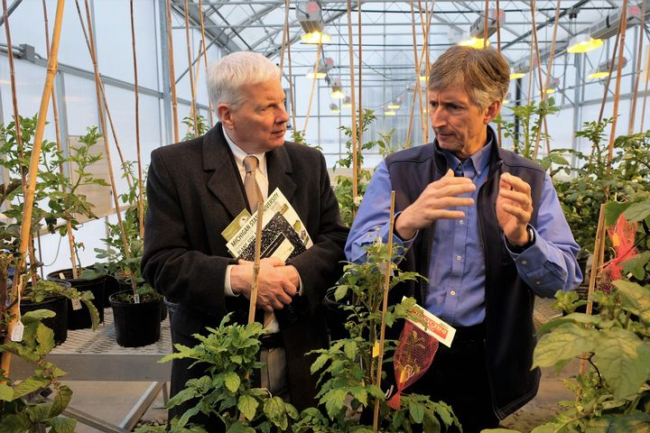 USDA National Institute of Food and Agriculture Director Scott Angle (left) learns about potato research with David Douches, director of the MSU Potato Breeding and Genetics Program, while visiting the MSU Horticulture Teaching and Research Center.