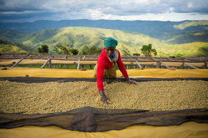 David Ortega Shares Insights with Forbes on the Economics of Coffee Farming