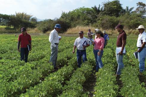 Farmers and researchers examine a field of small red beans.