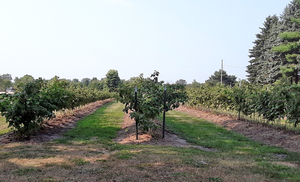 West central Michigan small fruit update – Sept. 8, 2020