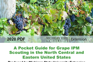 Mobile-friendly guide for grape IPM scouting is now available