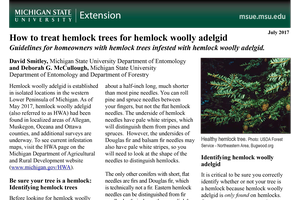 How to treat hemlock trees for hemlock woolly adelgid
