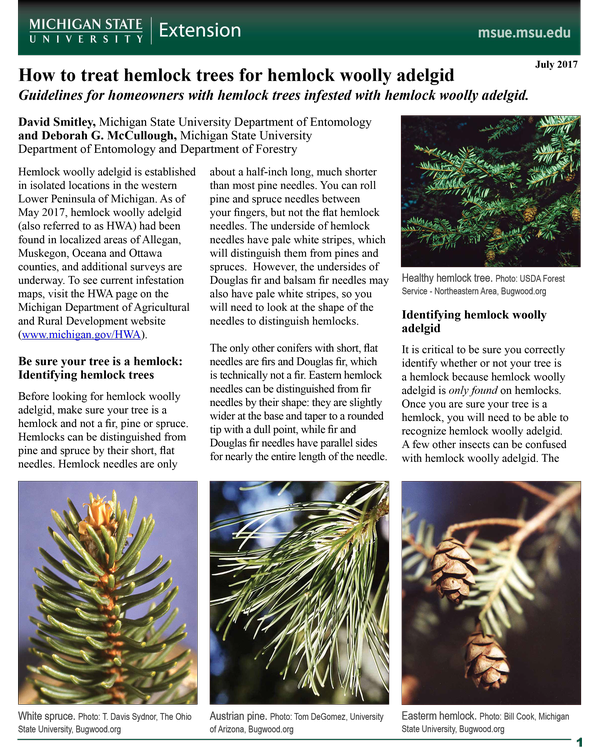 Insects of Eastern Spruces Fir and Hemlock
