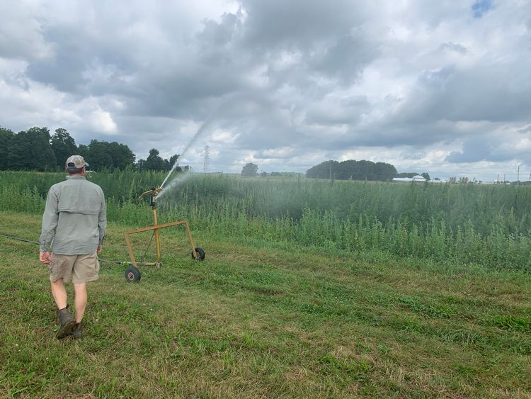 MSU Research Technician, Chris Robbins oversees an irrigation application to industrial hemp plots on the MSU South Campus Research Farm.