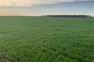 Herbicide options for weed control in winter wheat