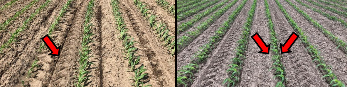 Comparison of coulter-inject and Y-drop Nitrogen placement