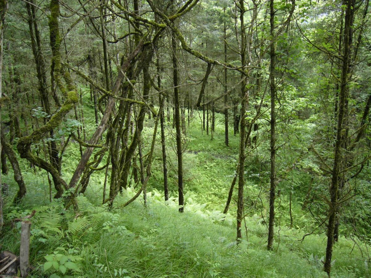 Secondary forest in Wolong Nature Reserve