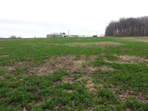 Damage to an alfalfa stand