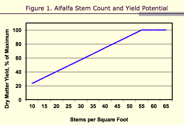 Alfalfa stem count and yield potential