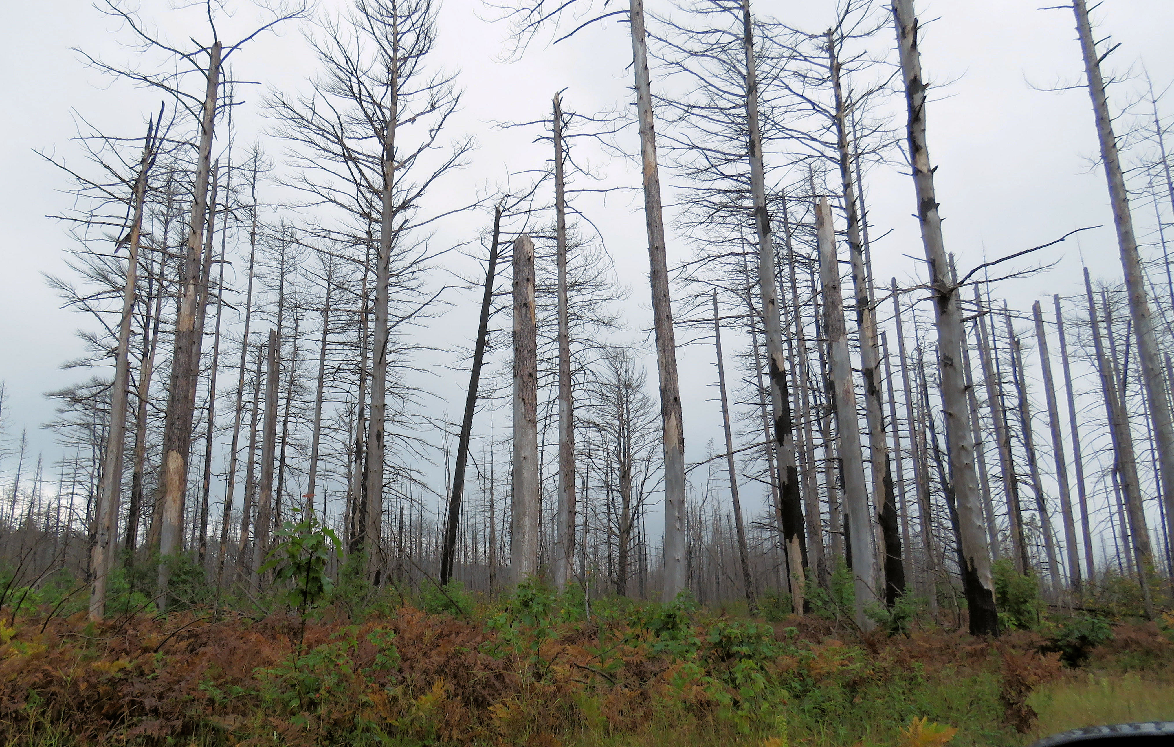 Timber salvage - Forestry