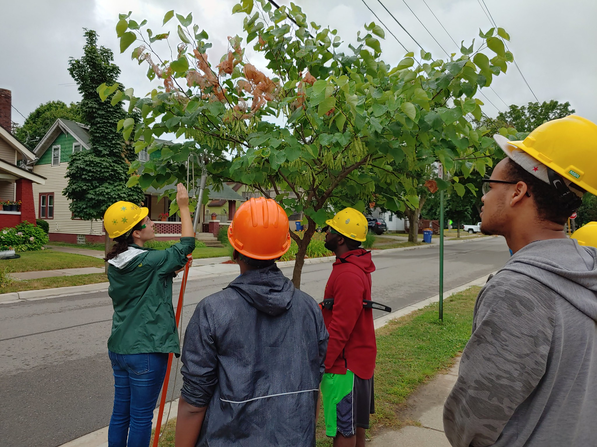 Tori Power, Friends of the Grand Rapids Parks, demonstrates pruning techniques to MSU Forestry students during the department's summer 2019 study away program. Pictured left to right: Tori Power, Davien Graham, Mario Singleton and Derrick Wade.