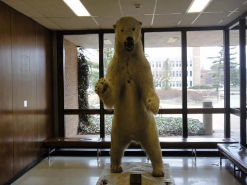 MSU Natural Resources Building Polar Bear