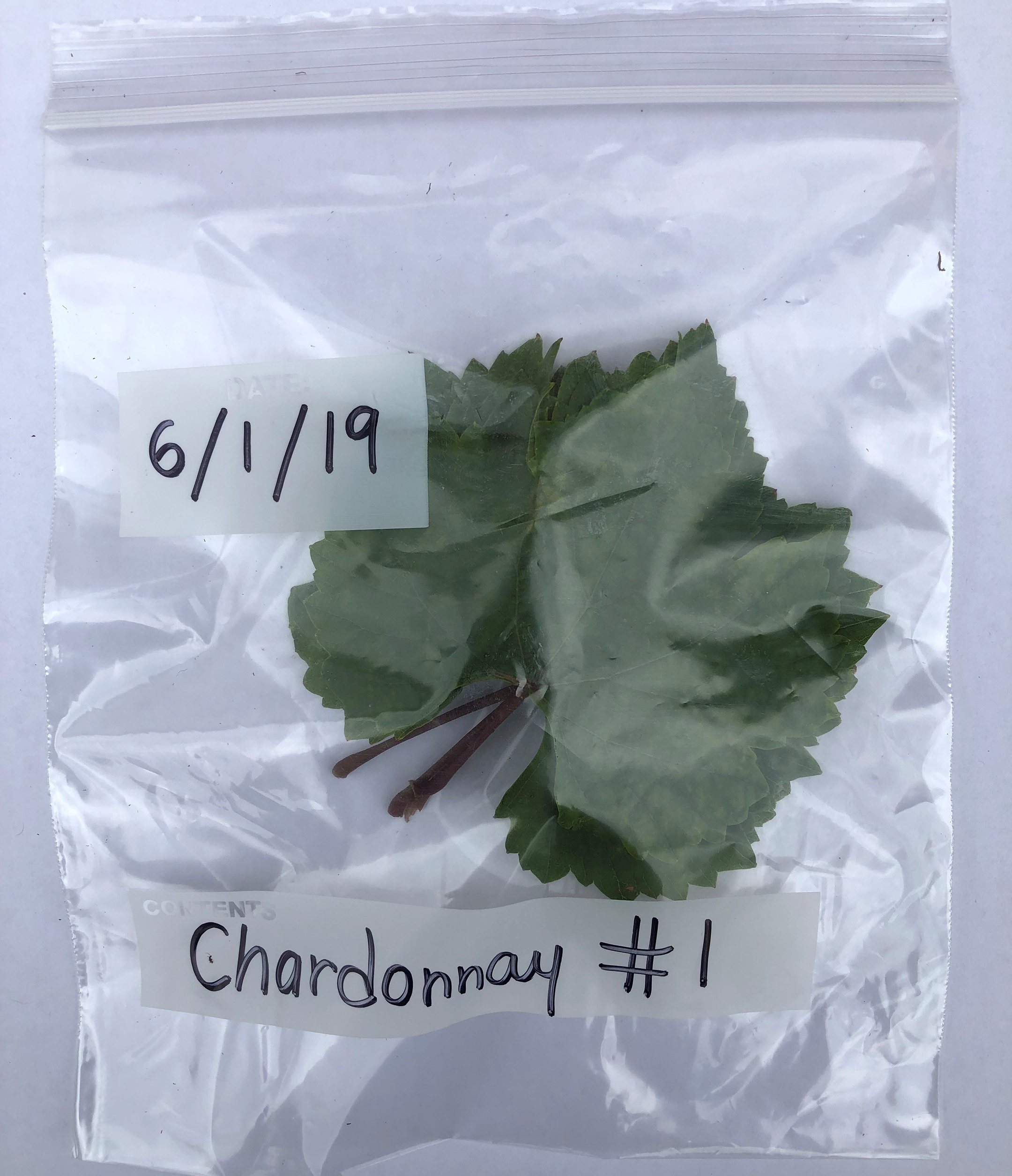 A leaf sample from a single grapevine.