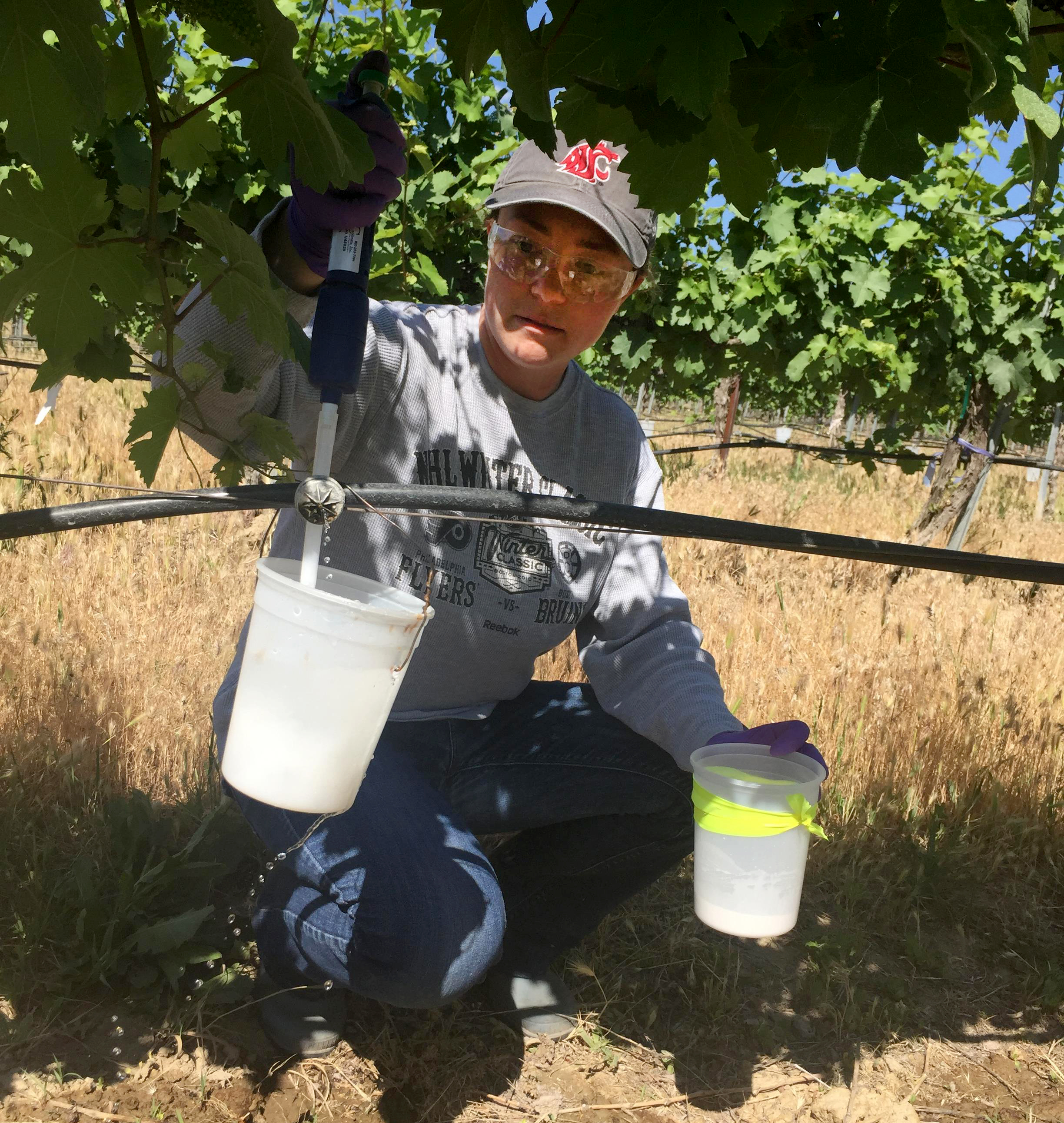 Katherine East applying nematicides in a vineyard trial