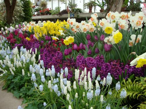 bulb garden. Spring Bulb Show Is Included With Your Admission To Hidden Lake Gardens! Garden