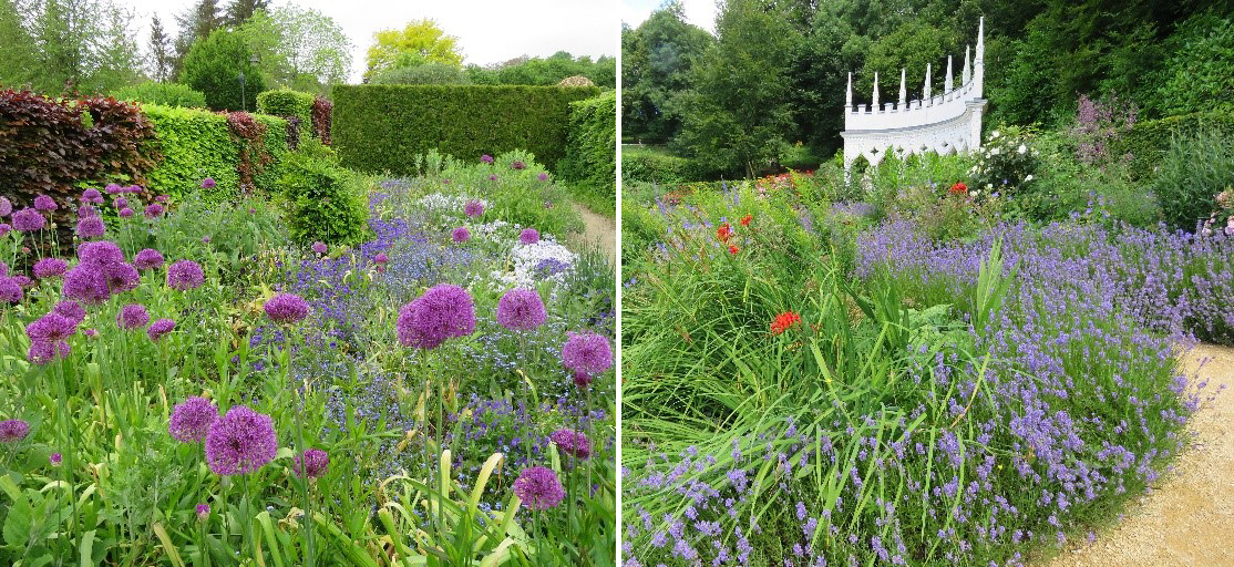 Allium and lavender