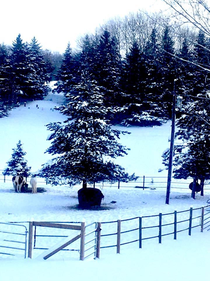 Winter White Farms