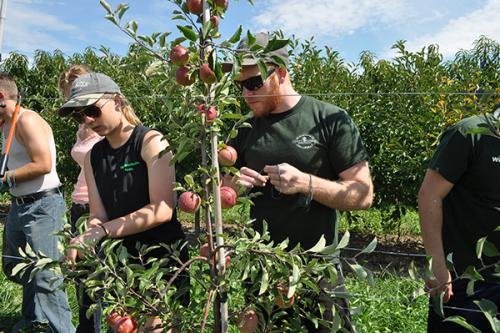 Institute of Agricultural Technology students pruning and training an apple tree